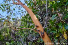 Встретится красивое дерево - 1000 Окон Гуимара на Тенерифе