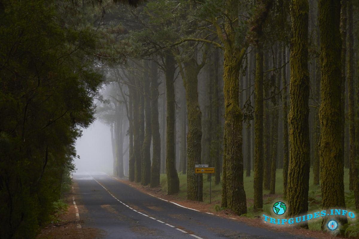 Лес Эсперанса в Национальном парке Тейде - Тенерифе