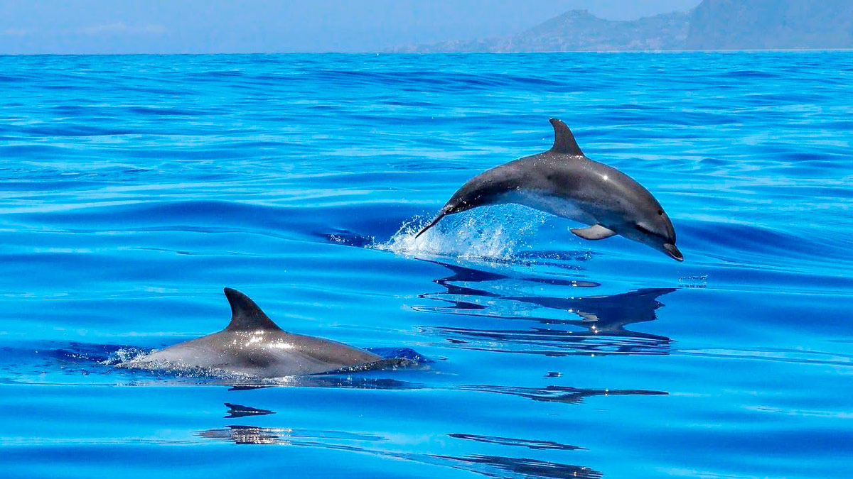 Дельфины в Пуэрто-Рико - Гран-Канария