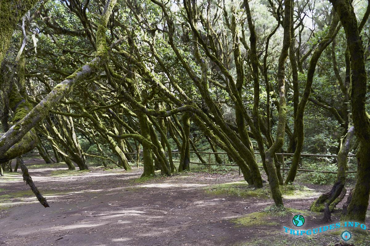 Парк Гарахонай на Ла Гомера