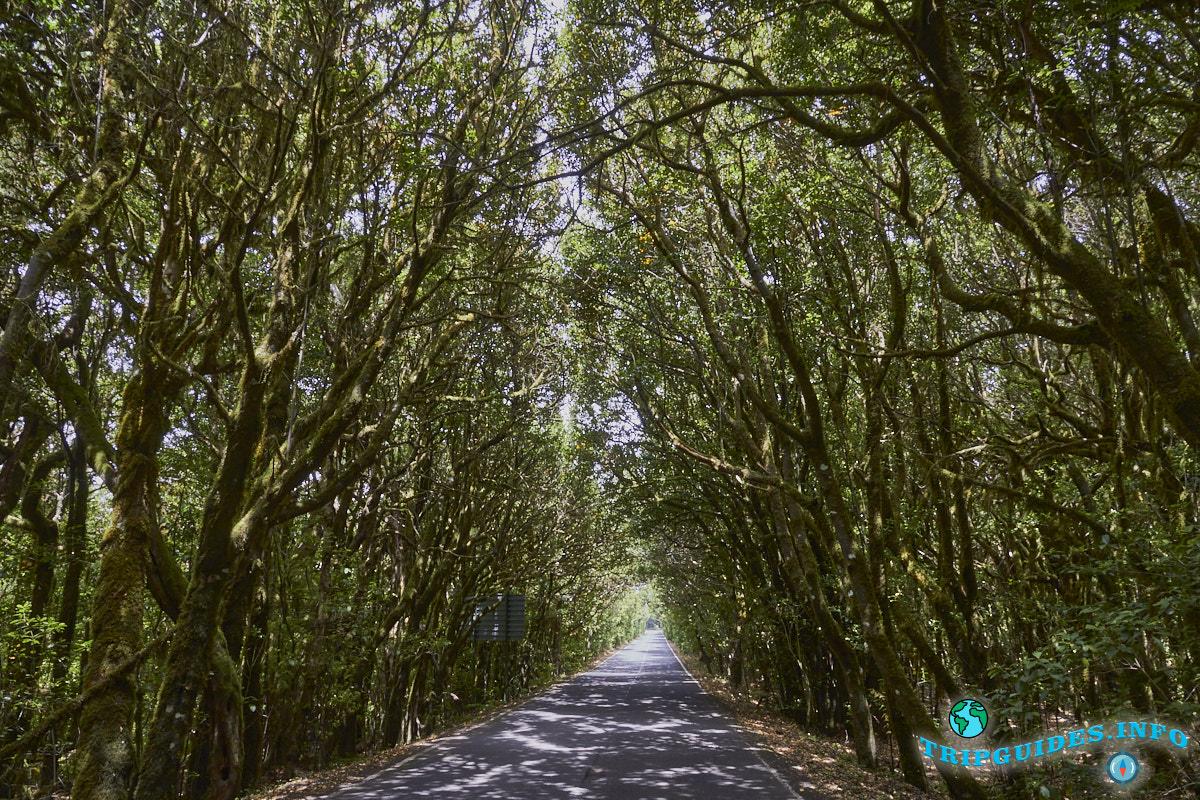 Национальный парк Гарахонай на острове Ла-Гомера