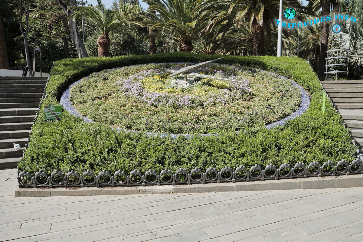 Цветочные часы - Парк Гарсии Санабрии в Санта-Крус-де-Тенерифе Канарские острова Испания