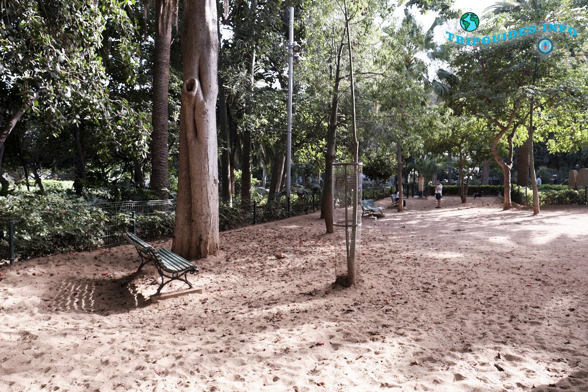 Выгул собак - Парк Гарсии Санабрии в Санта-Крус-де-Тенерифе Канарские острова Испания