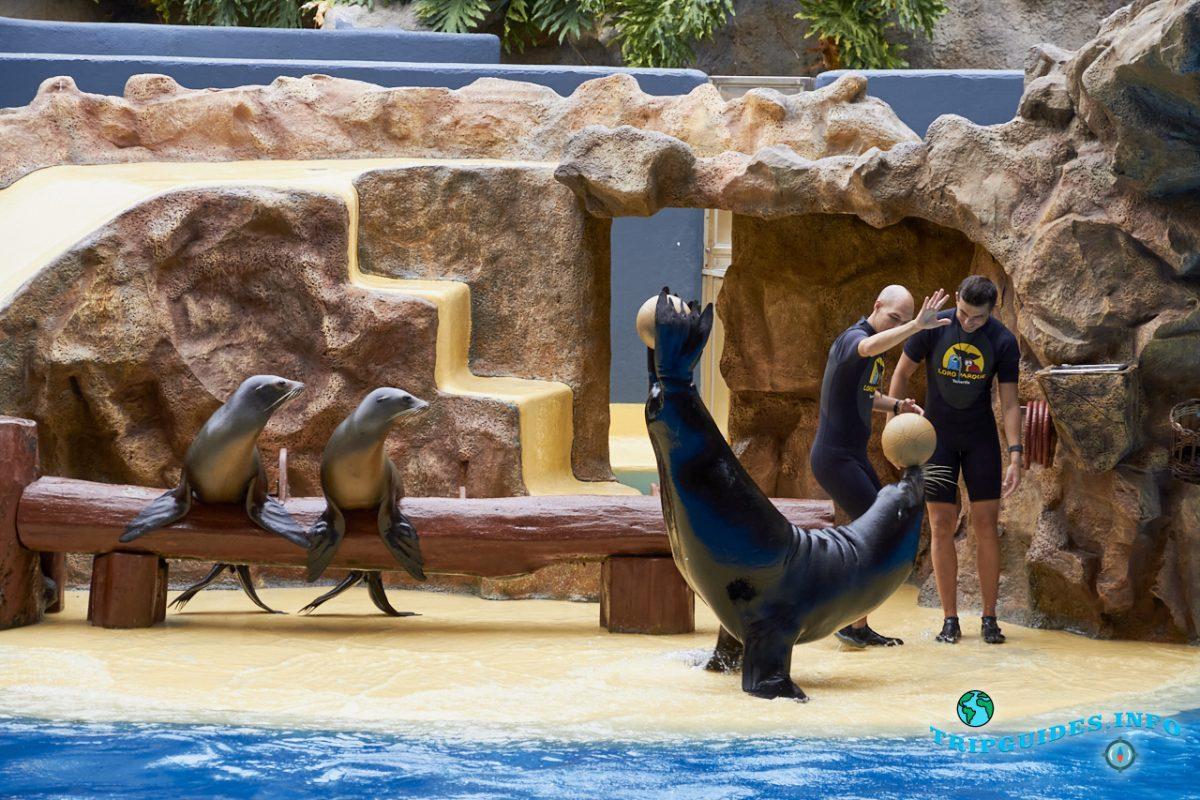 Шоу морских львов в Лоро парке Тенерифе