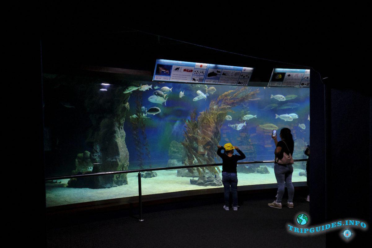 Аквариум в Лоро парке Тенерифе