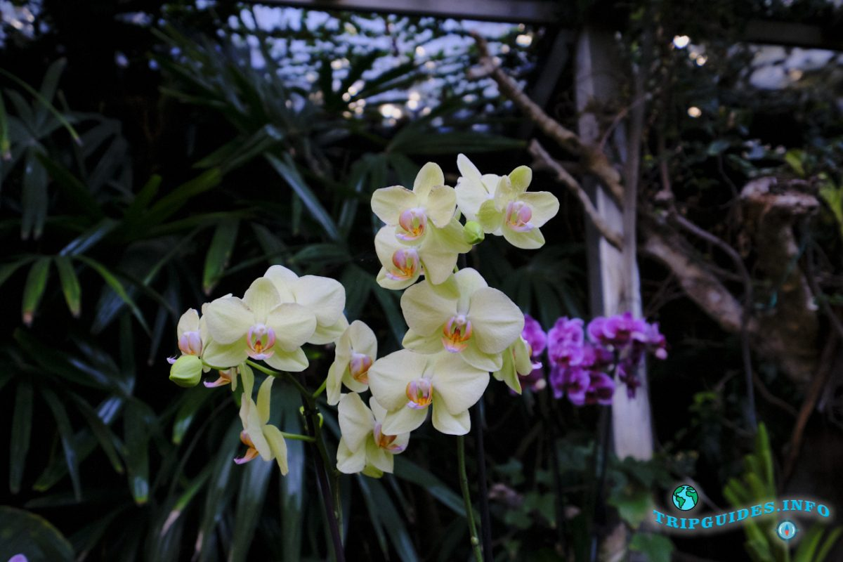 Сад орхидей в Лоро парке Тенерифе