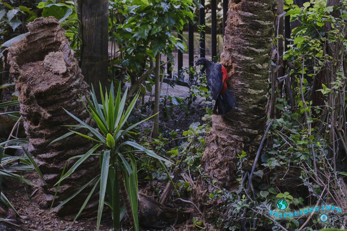 Катандра Тритопс в Лоро парке Тенерифе