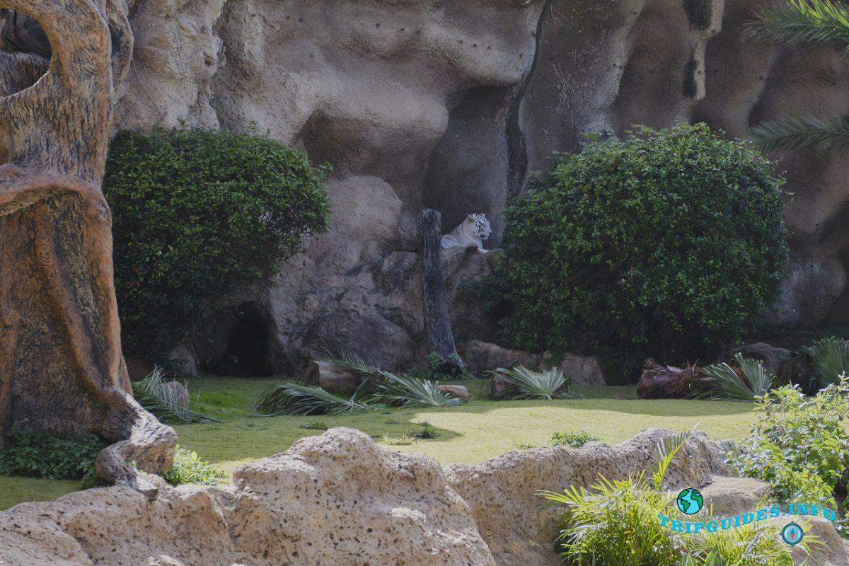 Остров Тигров в Лоро парке Тенерифе