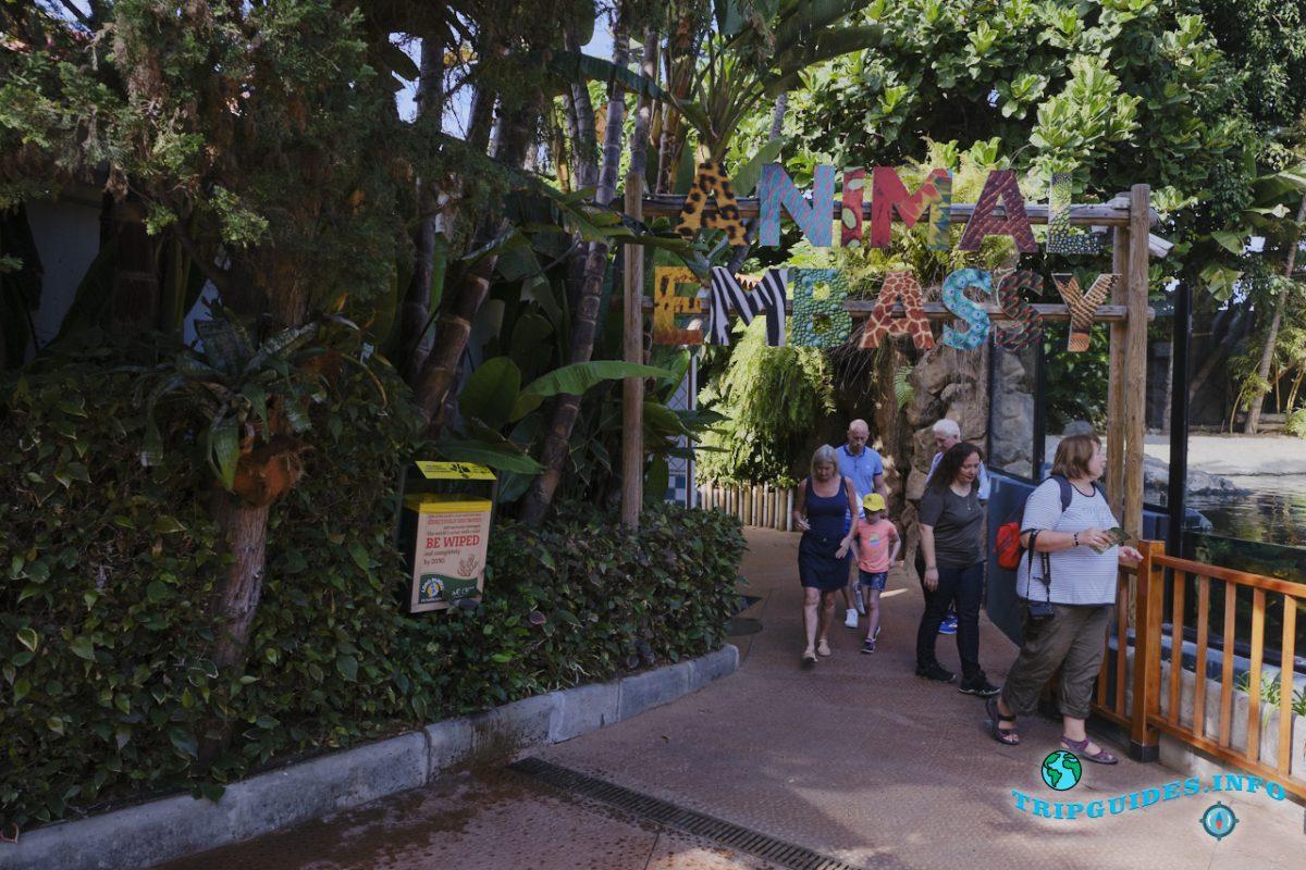 Посольство животных (Animal Embassy) в Лоро парке Тенерифе
