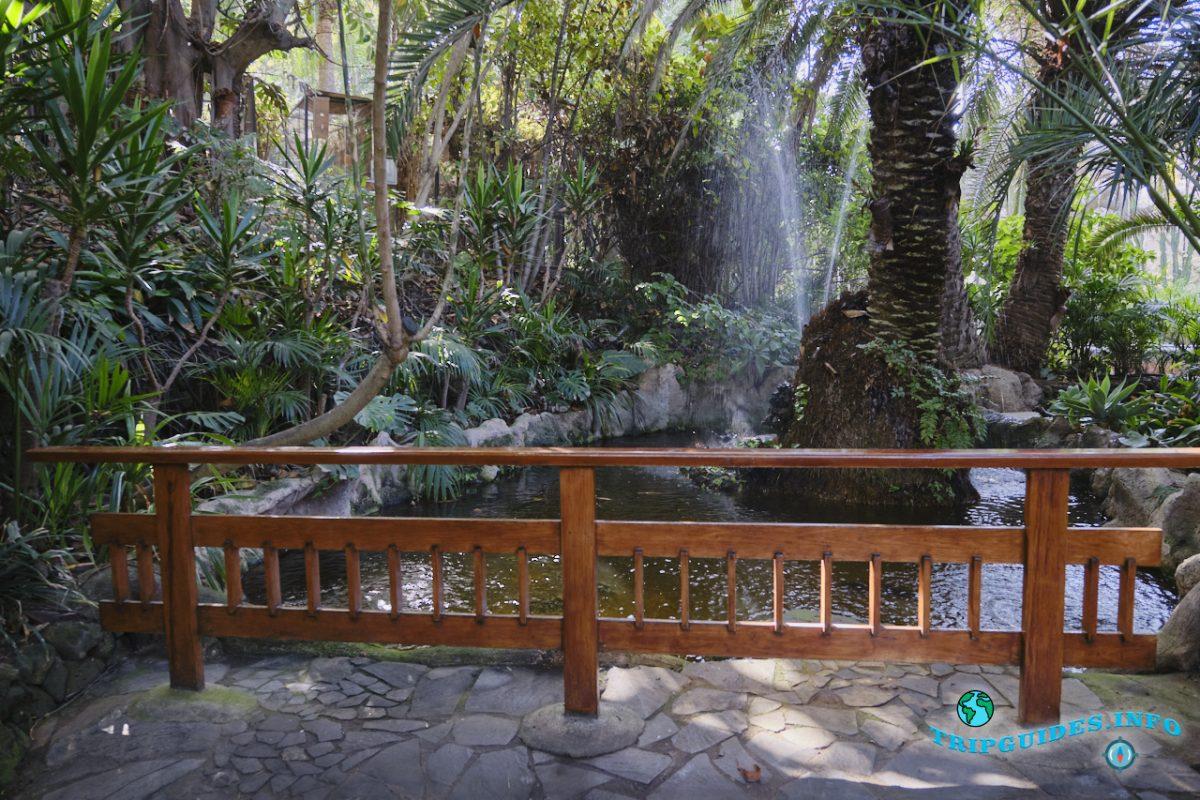 Флора в Лоро парке Тенерифе