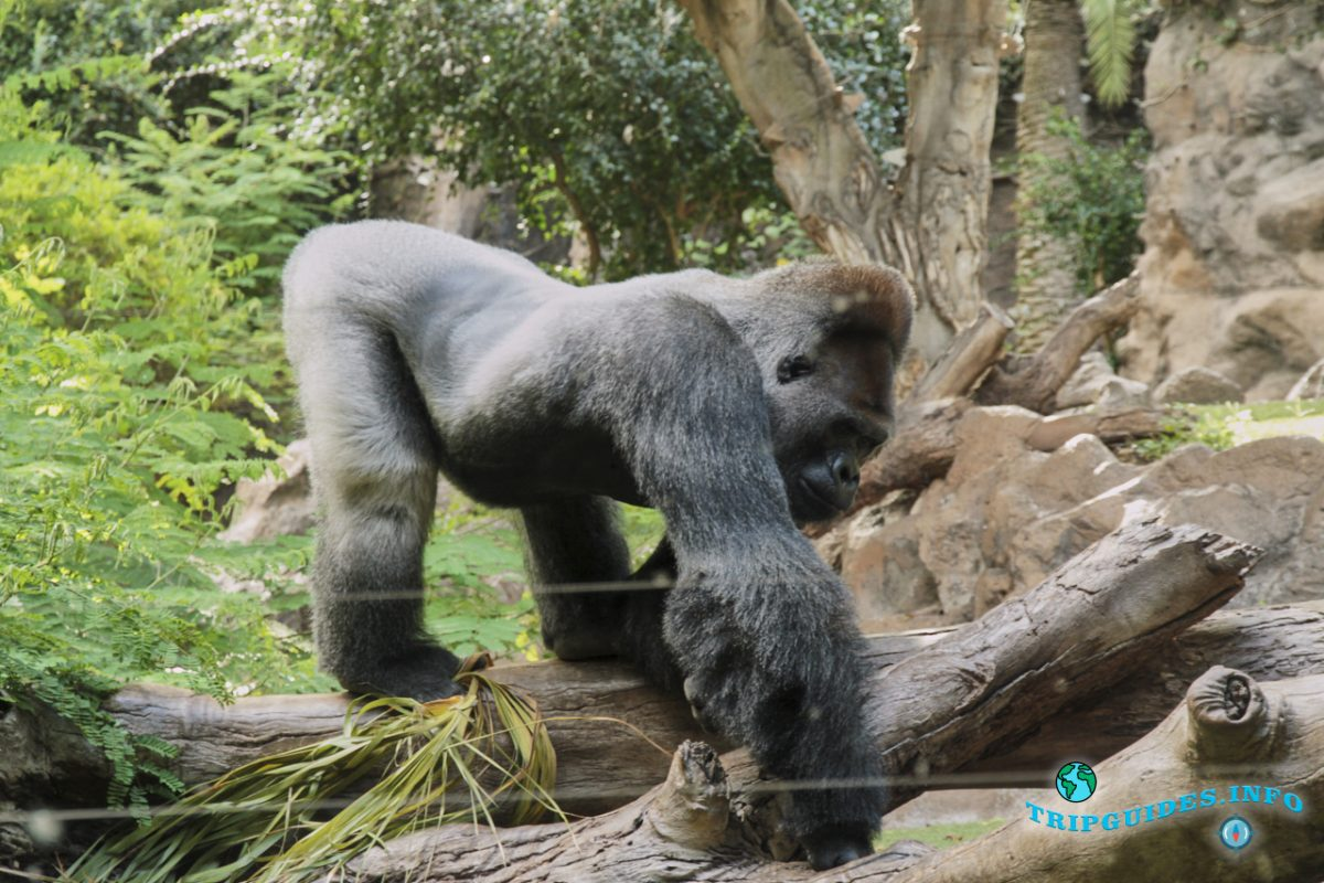 Животные в Лоро парке Тенерифе