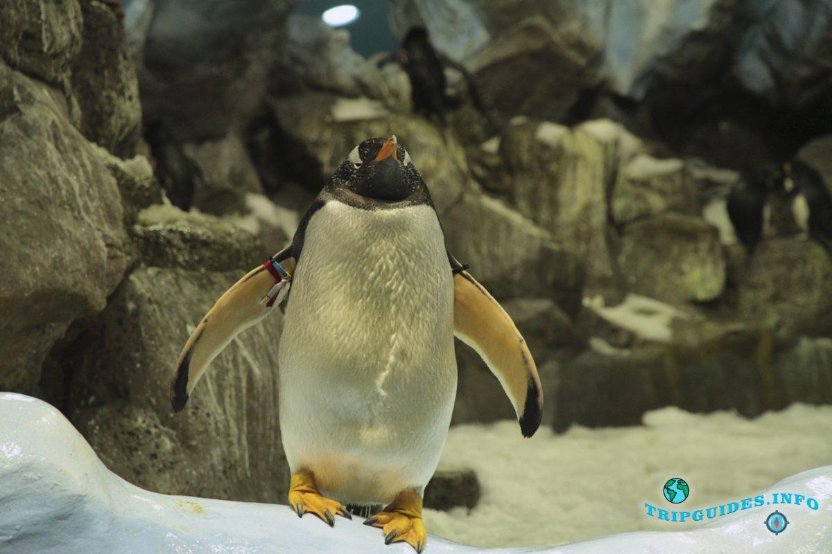 Планета пинвинов (пингвинариум) в Лоро парке Тенерифе