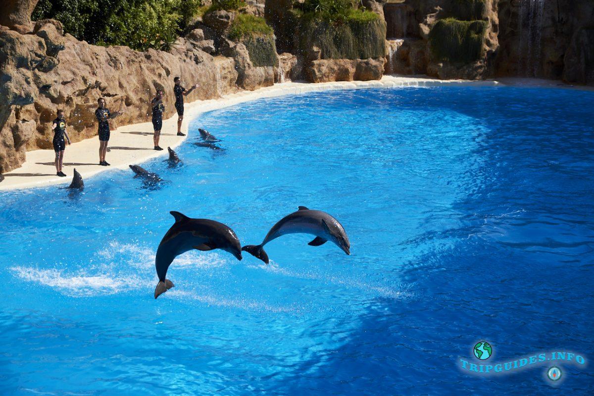Дельфинарий в Лоро парке Тенерифе - шоу с дельфинами