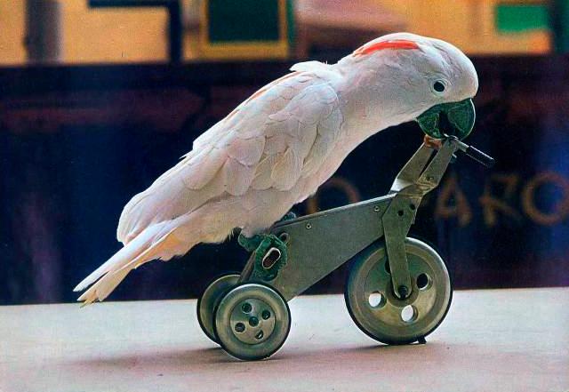 Первое шоу с попугаем Лео - Лоро парк, Тенерифе
