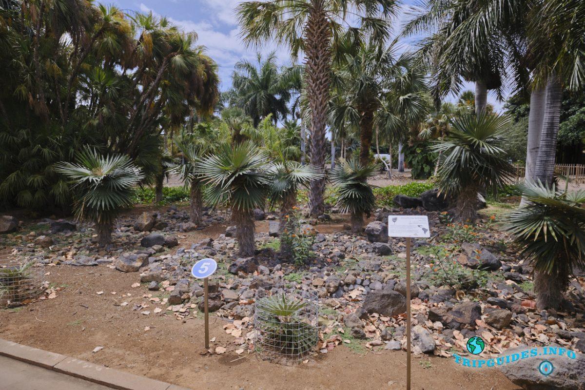 Пальметум - пальмовый парк в Санта-Крус-де-Тенерифе, Канарские острова, Испания