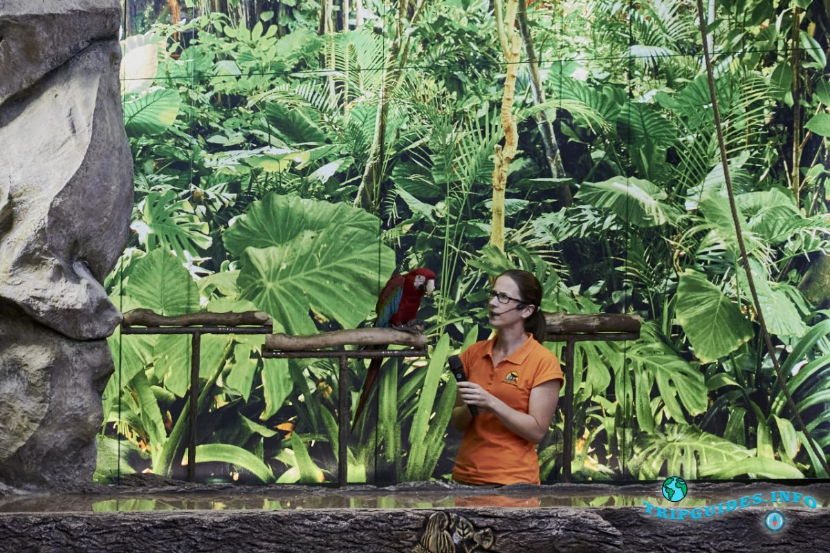 Шоу попугаев в Лоро парке Тенерифе