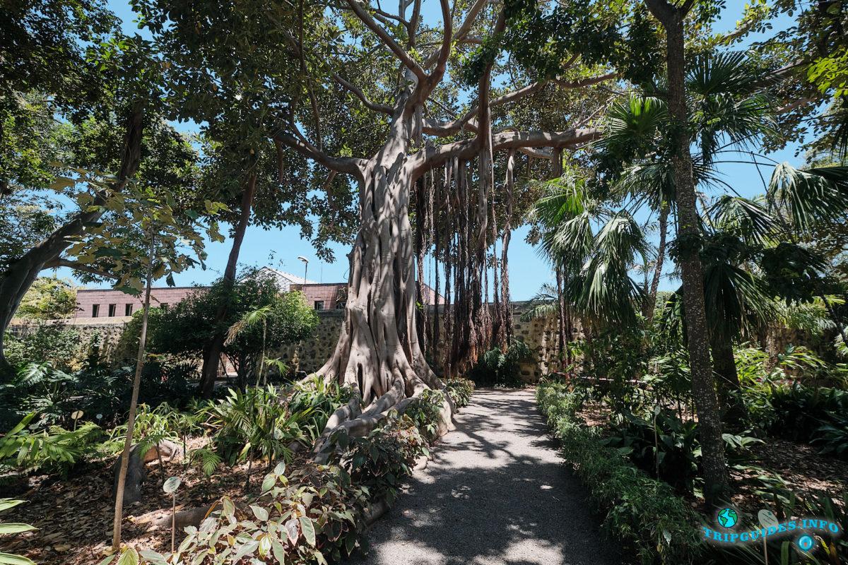 Ботанический сад Пуэрто-де-Ла-Крус на севере Тенерифе - Канарские острова, Испания