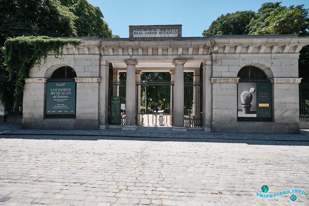 Королевский ботанический сад Мадрида в столице Испании (Real Jardín Botánico de Madrid)
