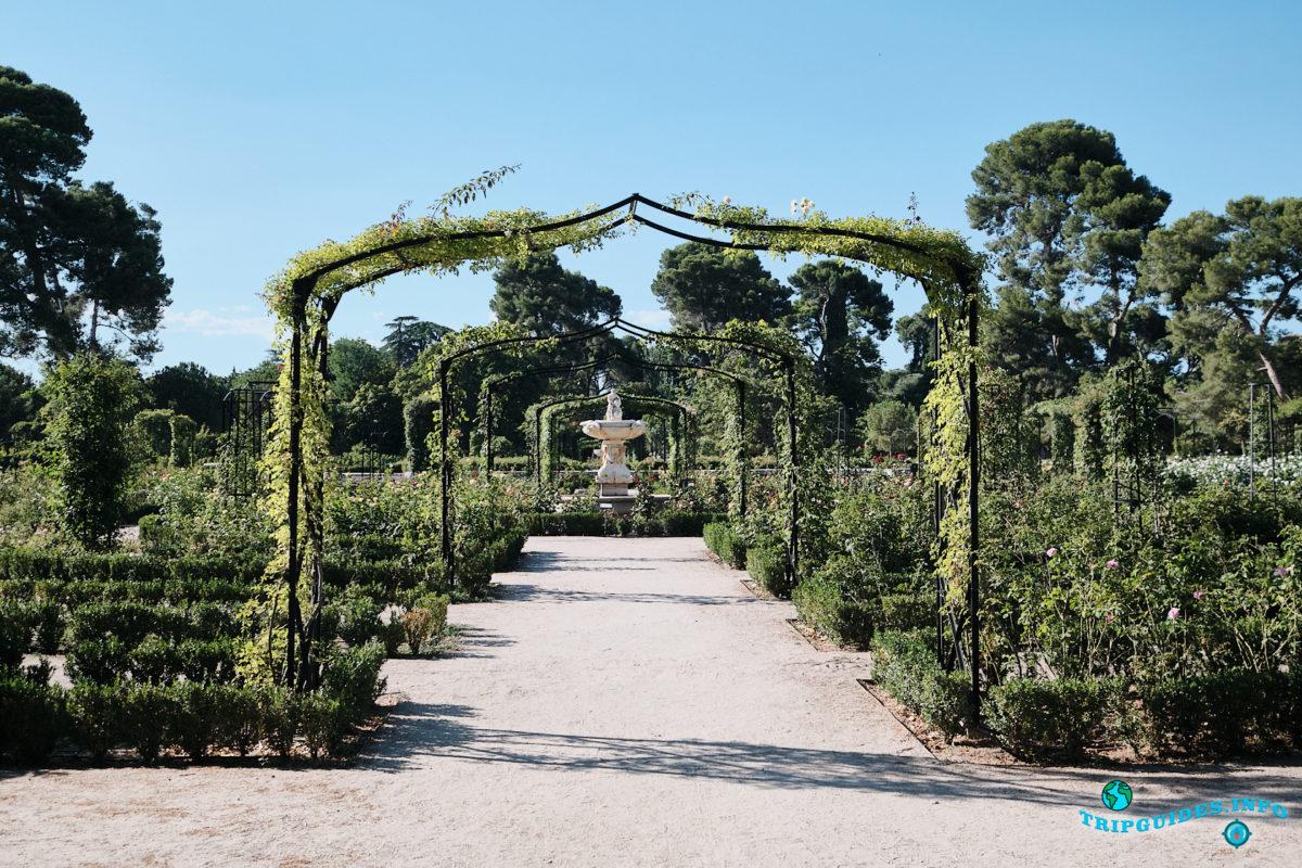 Розарий в парке Буэн-Ретиро в Мадриде - Испания (Parque del Buen Retiro)