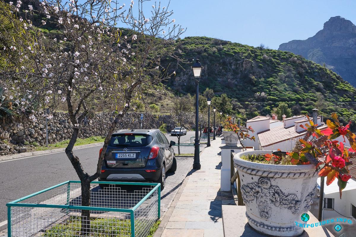 Цветет миндаль в Техеда на Гран-Канарии - Канарские острова, Испания