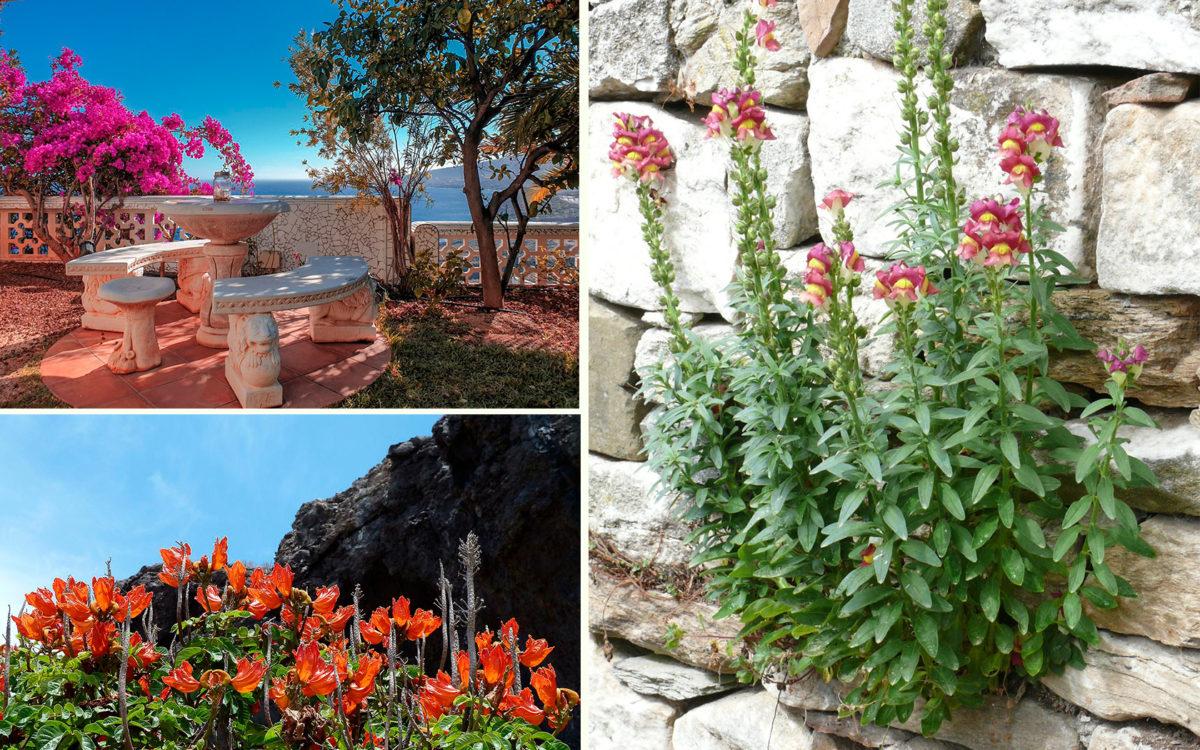 Новый год на Тенерифе - Цветущий декабрь