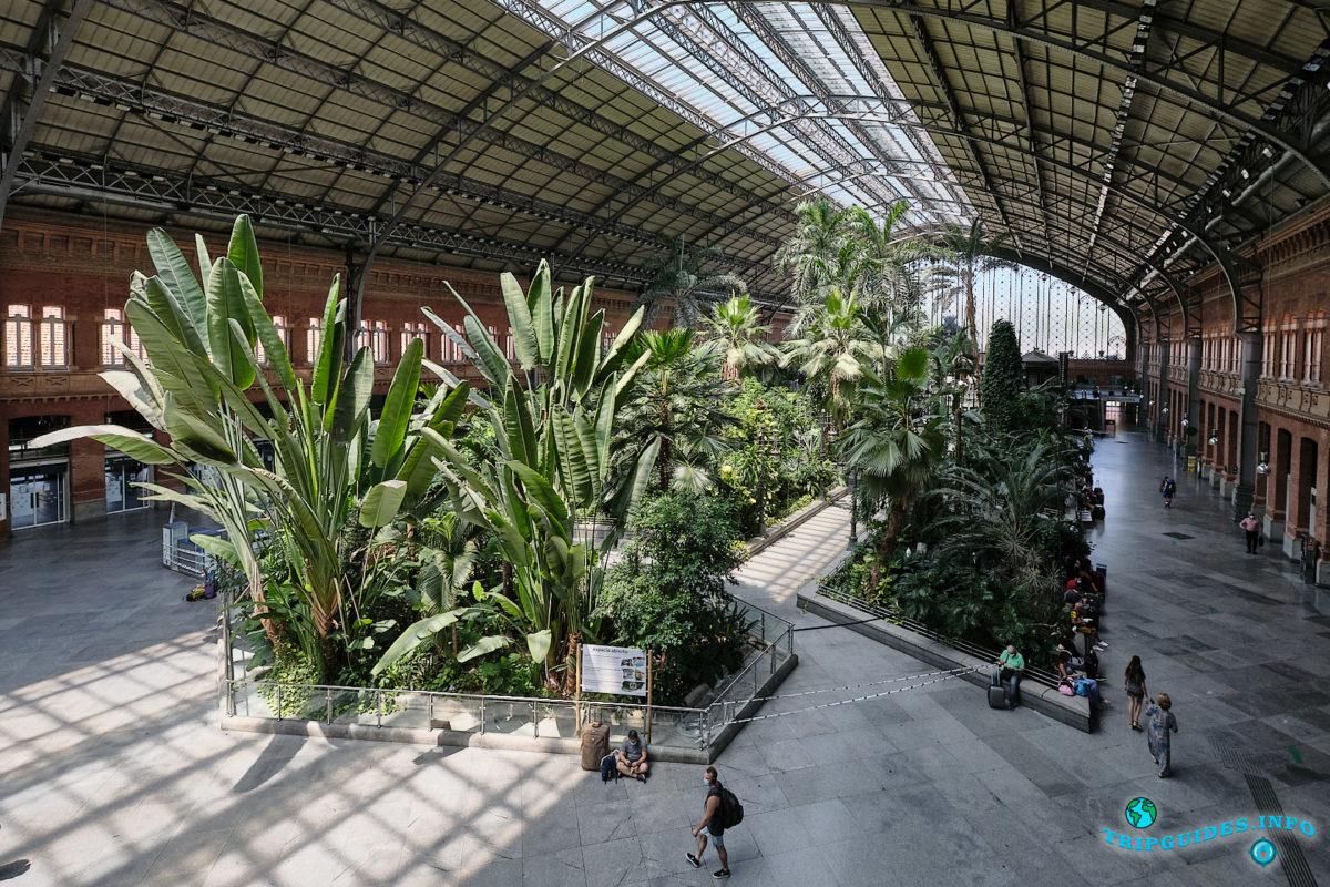 Железнодорожный вокзал - станция Аточа в Мадриде, столице Испании