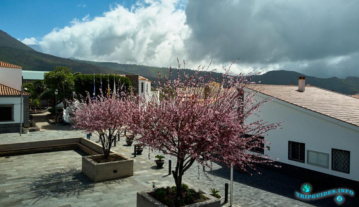 Цветение миндаля на главной площади Сантьяго-дель-Тейде - остров Тенерифе - Канарские острова - Испания