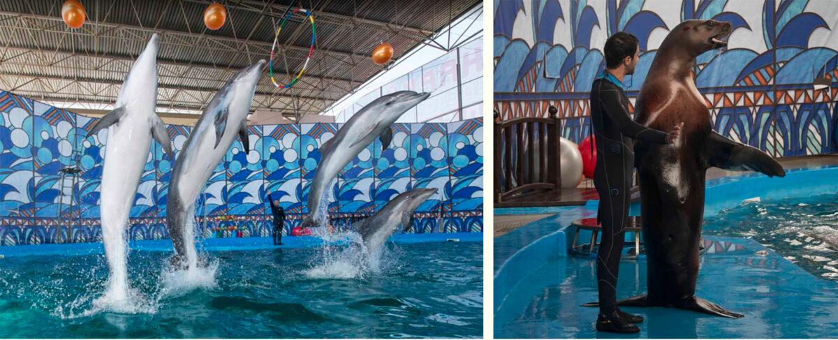 Дельфинарий «Морская звезда» (Лазаревское) - Россия