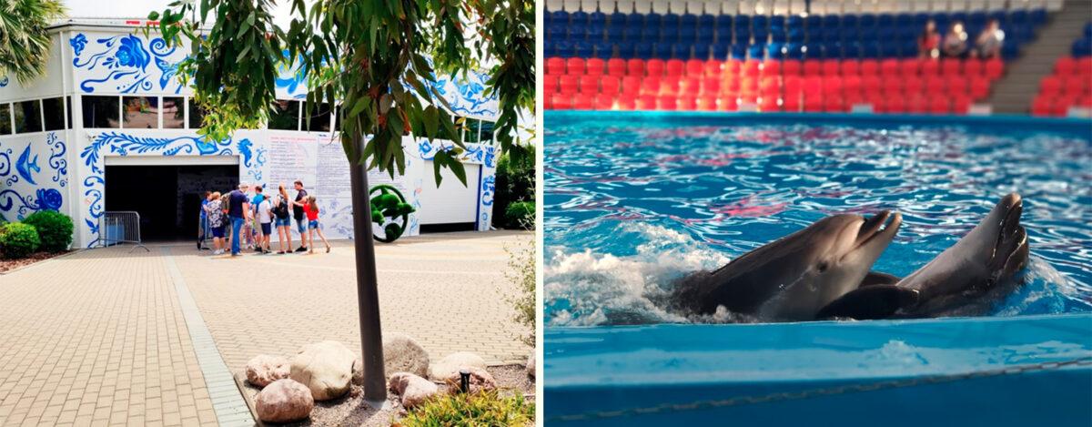 Дельфинарий («Сочи Парк») в Сочи - Россия