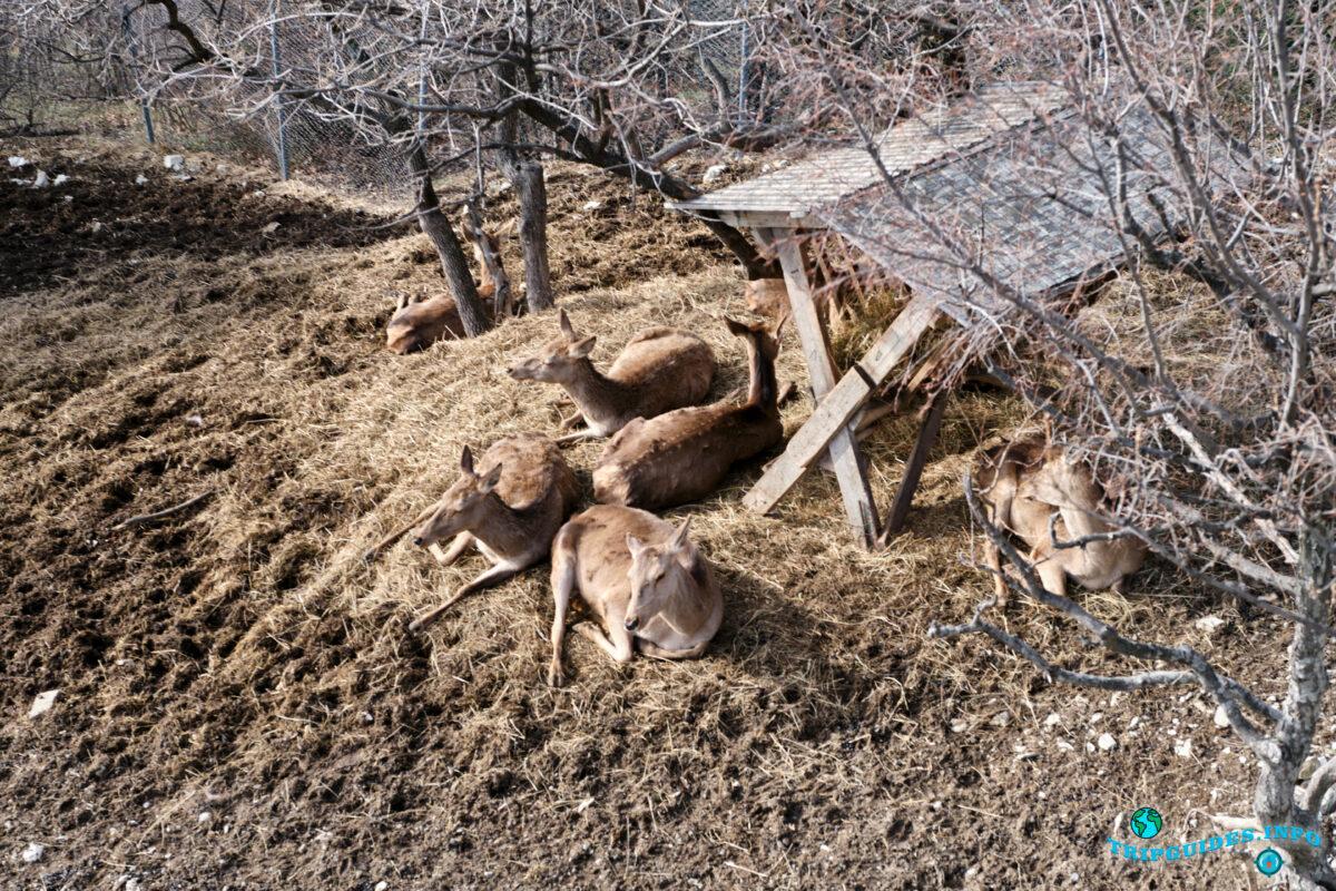 Питомник оленей - Вид с канатной дороги в Сафари-парке Геленджик