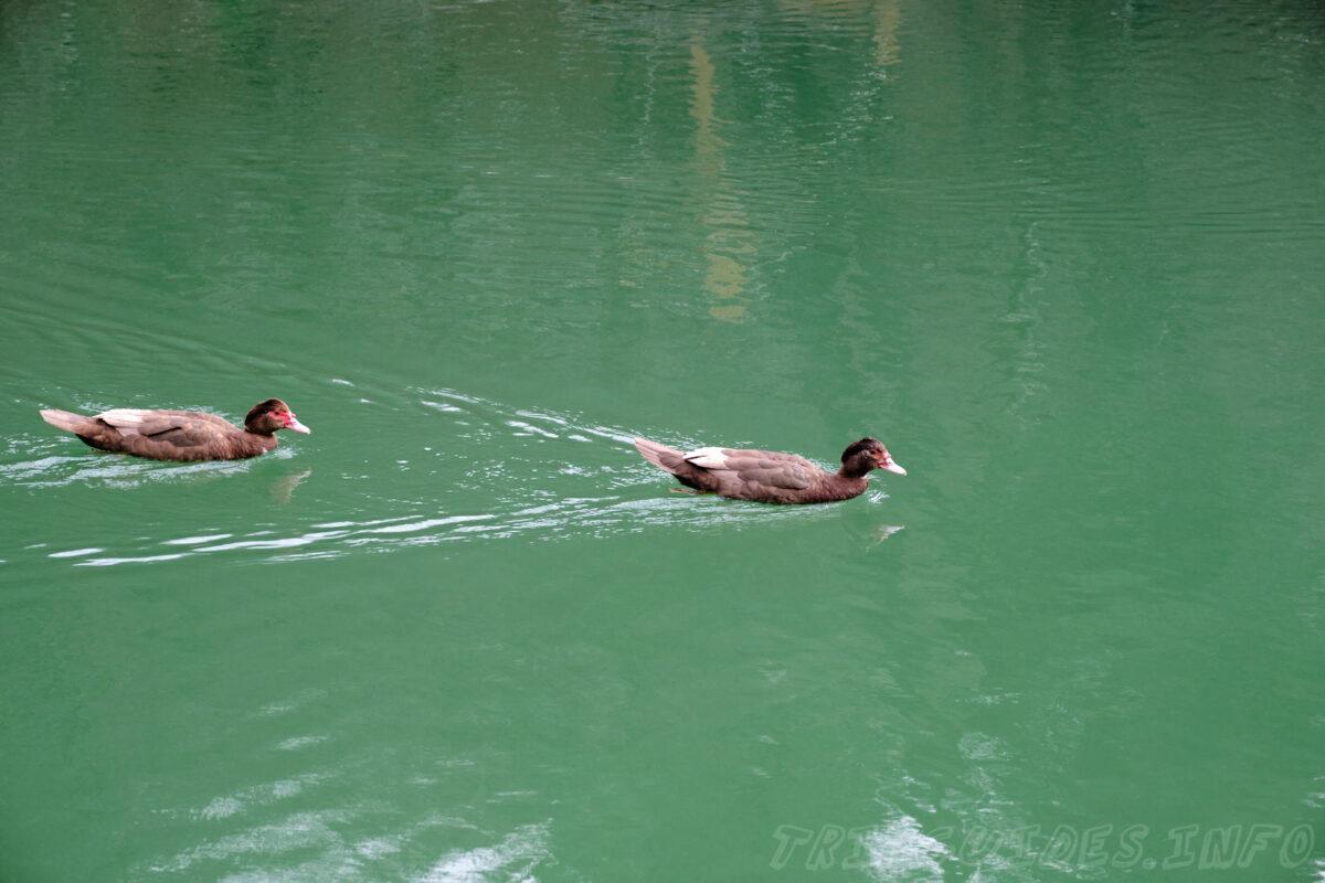 Пруд и утки - Парк Олимп в Геленджике