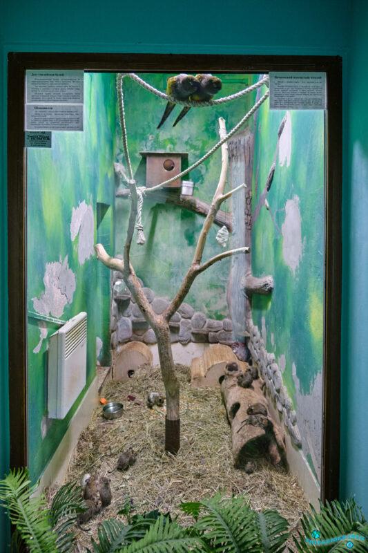 Террариум в Сафари-парк Геленджик