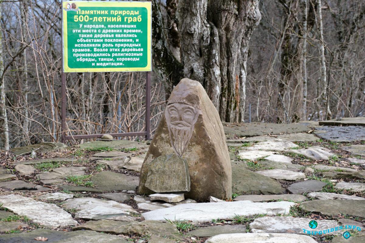 500 Летний граб - Аллея сказок в Верхнем парке Сафари-парка Геленджик
