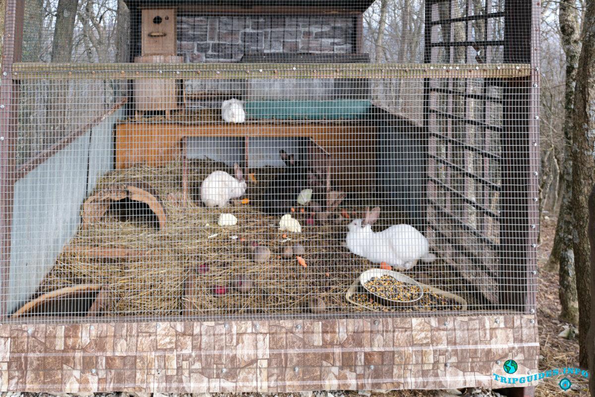Живые кролики - Аллея сказок в Верхнем парке Сафари-парка Геленджик