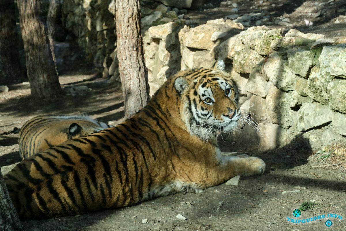 Какие животные в зоопарке в Сафари-парк Геленджик