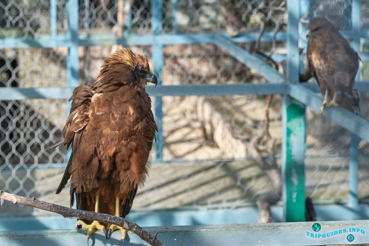 Какие животные и птицы в зоопарке в Сафари-парк Геленджик