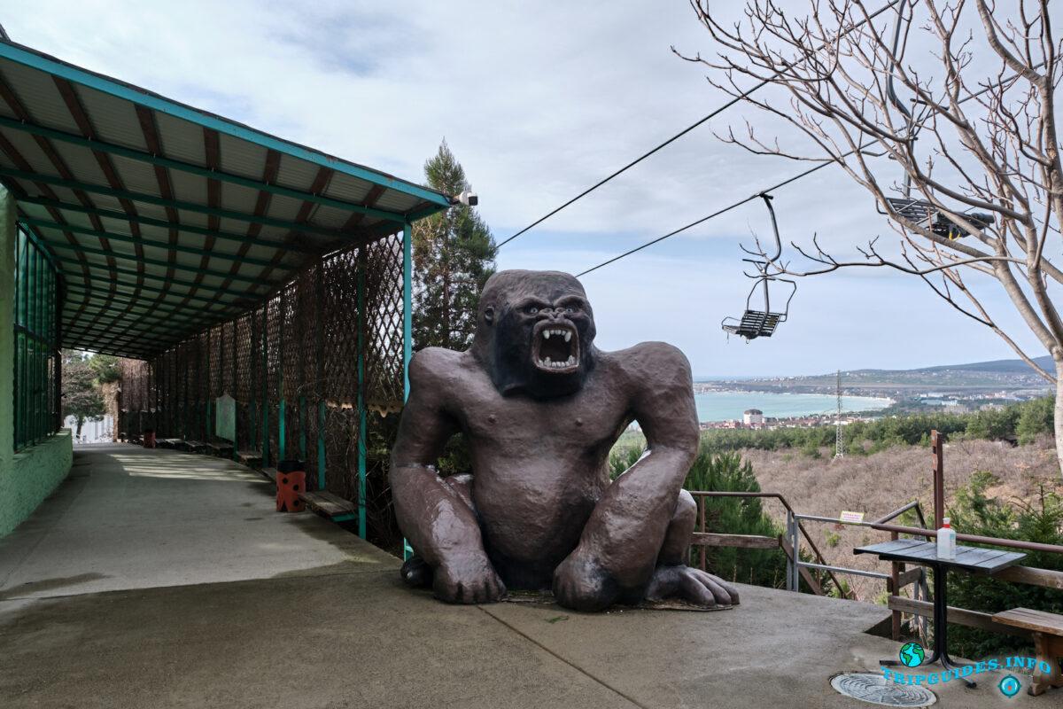 Обезьянник в зоопарке в Сафари-парк Геленджик