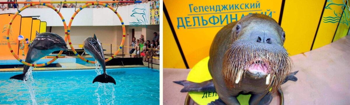 Геленджикский дельфинарий