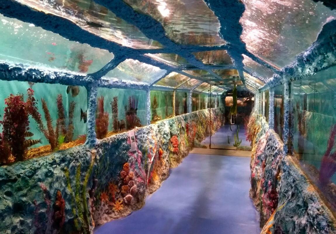 Тунель - Океанариум в Геленджике