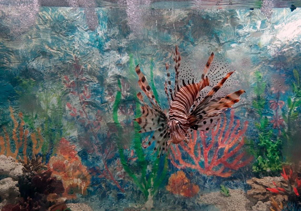 Хищные рыбы - Океанариум в Геленджике