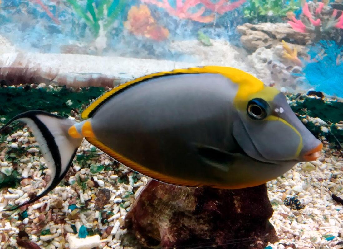 Экзотические рыбы - Океанариум в Геленджике