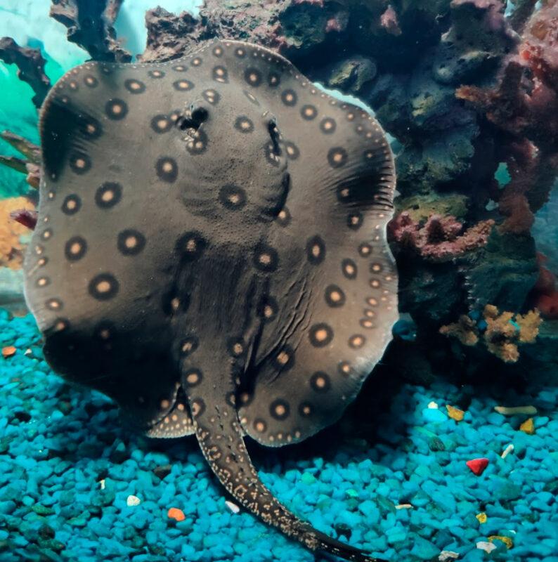 Скаты - Океанариум в Геленджике