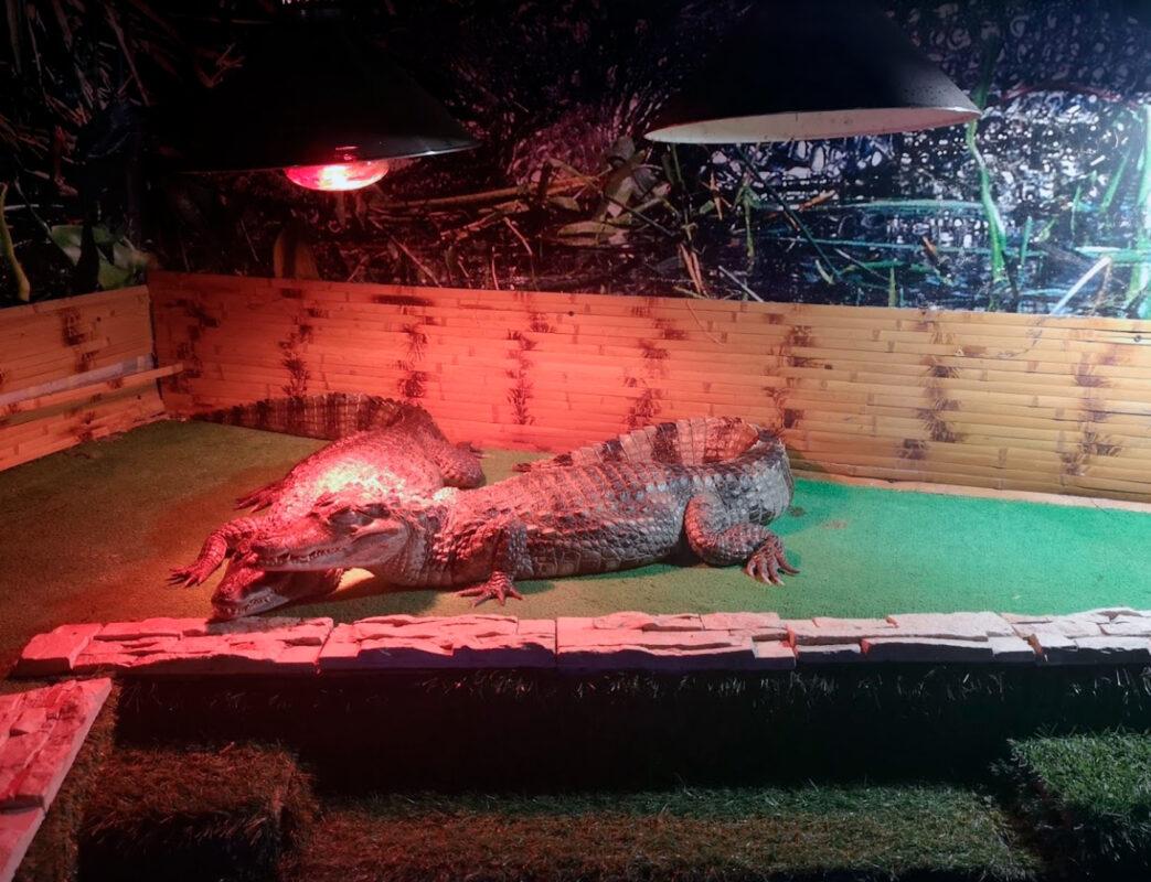 Крокодилы - Океанариум в Геленджике
