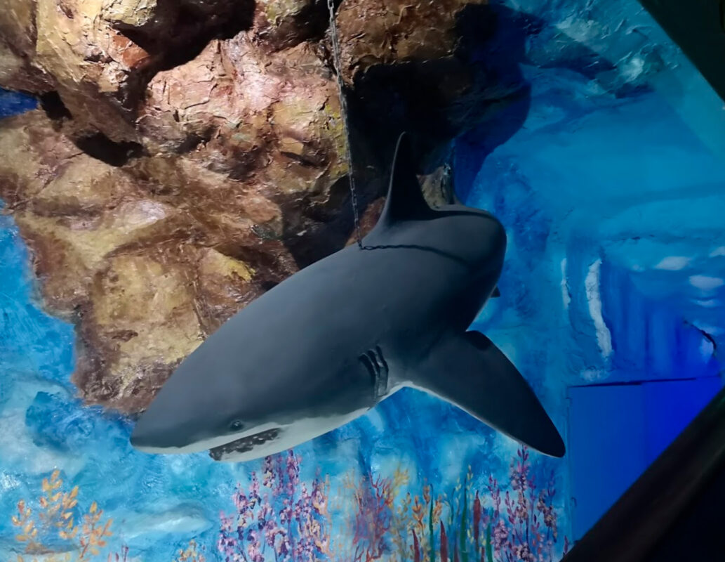 Макет акулы - Океанариум в Геленджике