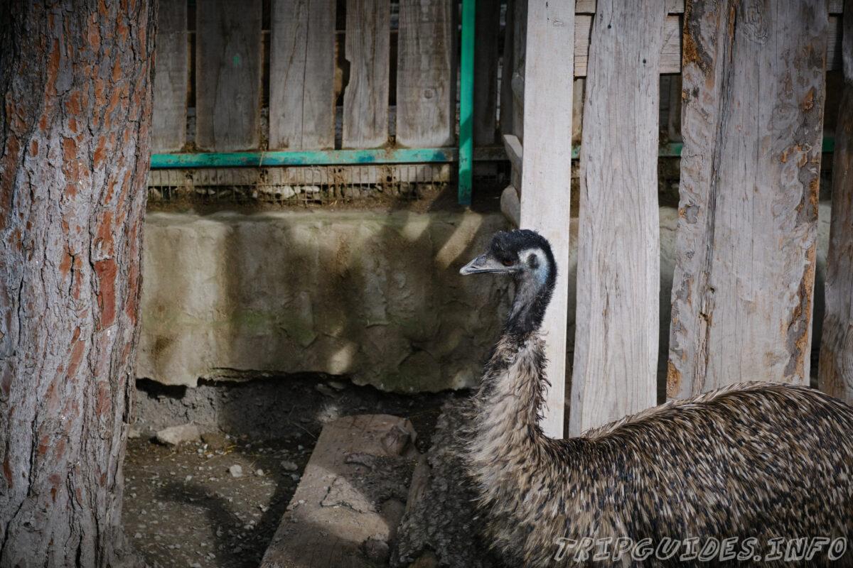 Зов Джунглей - Контактный зоопарк в Геленджике - Страусы