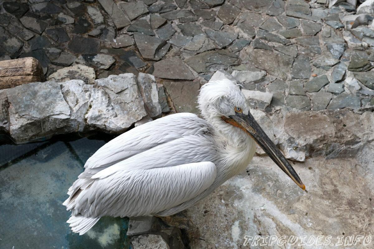 Зов Джунглей - Контактный зоопарк в Геленджике - Пеликаны
