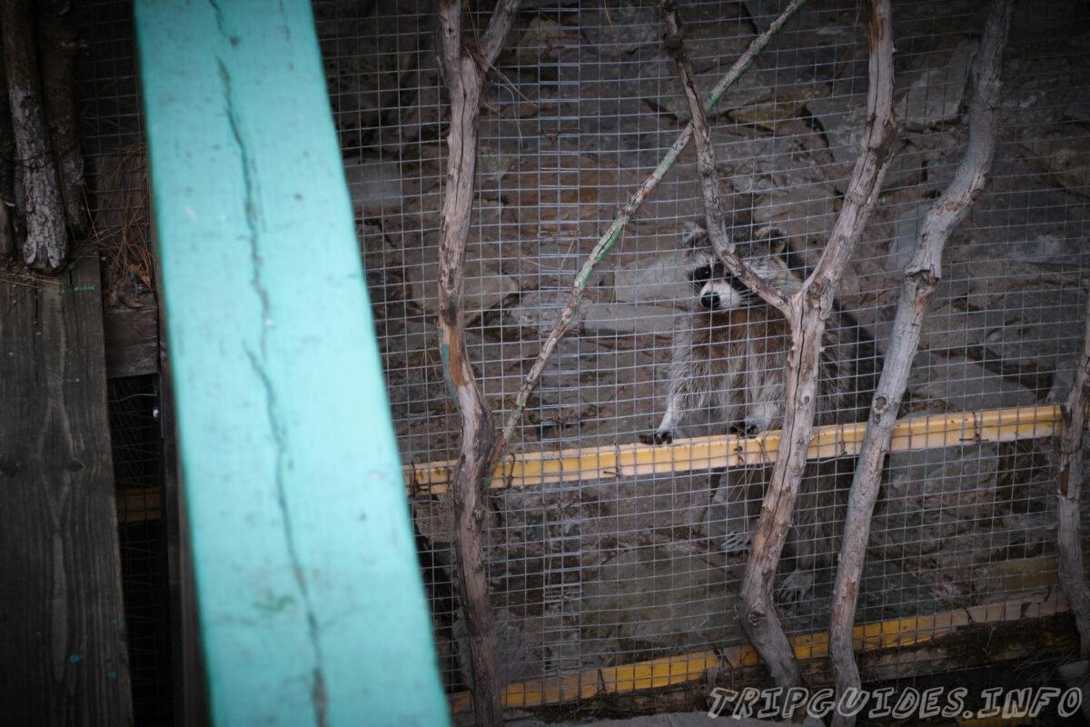 Зов Джунглей - Контактный зоопарк в Геленджике - Еноты