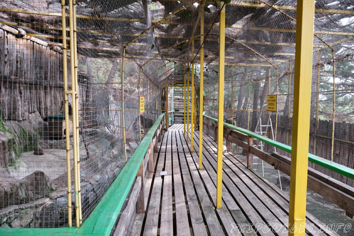 Зов Джунглей - Контактный зоопарк в Геленджике - вольер с енотами