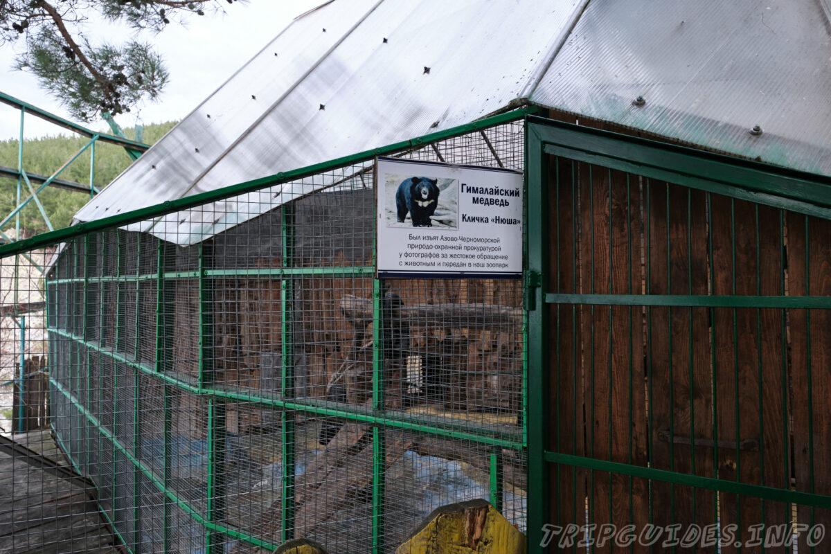 Зов Джунглей - Контактный зоопарк в Геленджике - Гималайский медведь