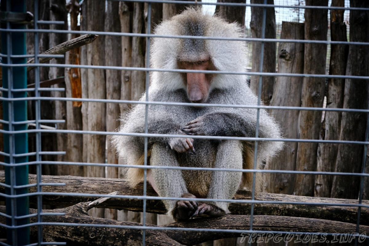 Зов Джунглей - Контактный зоопарк в Геленджике - Обезьяны